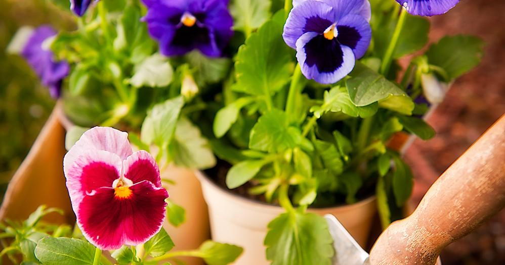 Gardening/Spring Ad
