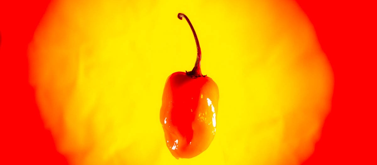 Are Habaneros HOT?