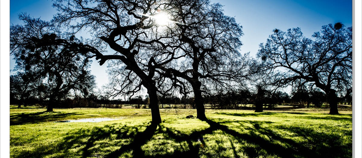 Winter's changing shadows and light - Corning, CA