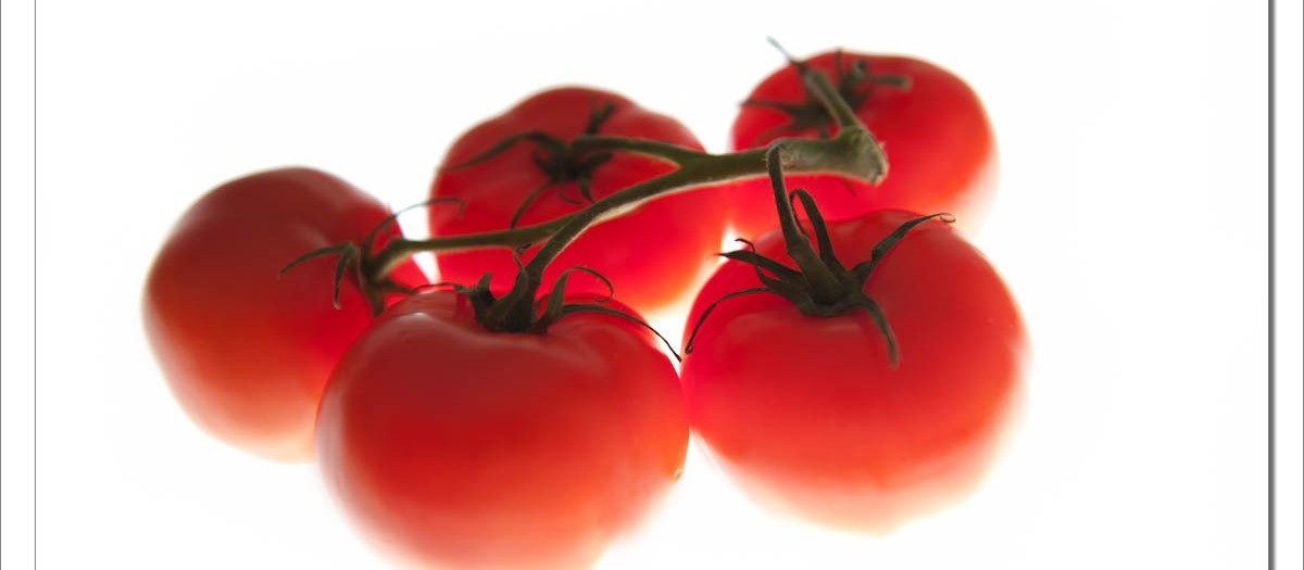 Insidious Tomatoes - A cooperative website of photographers